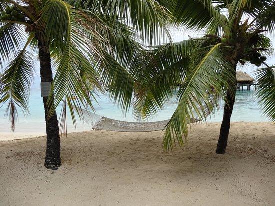Hilton Moorea Lagoon Resort & Spa : Resort Beach
