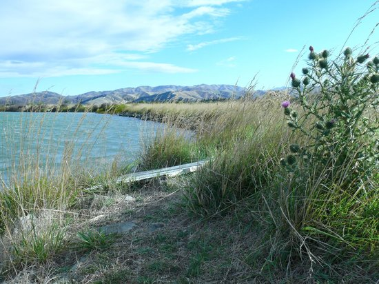 Driftwood Retreat and Eco-Tours : Walking in wetlands behind house