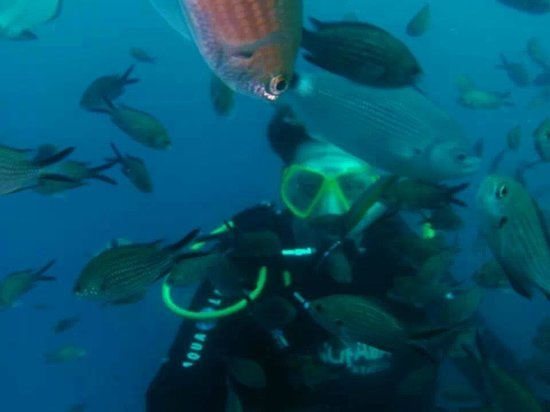 Dawn Diving: Me surrounded by fish!