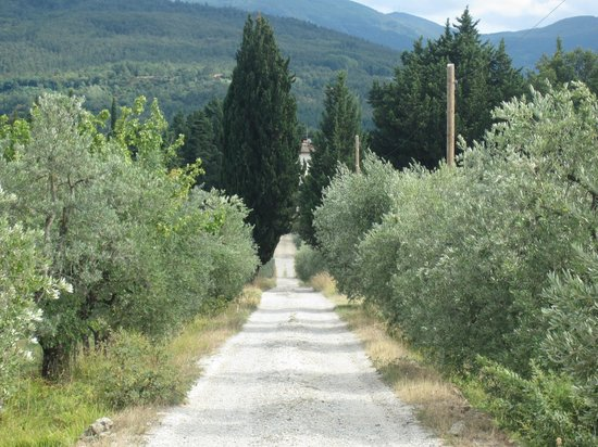 Podere Castellare - Eco Resort of Tuscany: allée