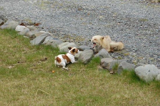 Alaska's Kodiak Island Resort: Playtime with the wildlife!