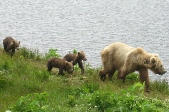 Alaska's Kodiak Island Resort: Kids going to school
