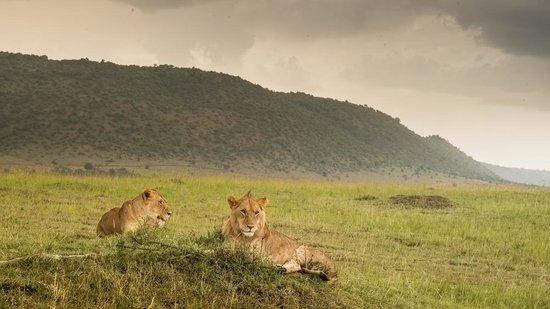 Kilima Camp : safari dans le masai mara
