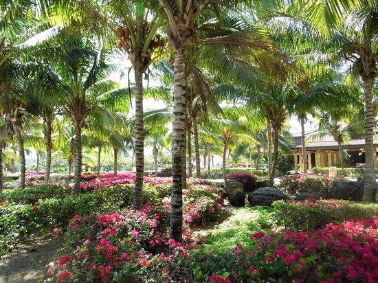 Melia Cayo Santa Maria: Beautiful gardens