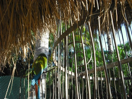 Las Palmas by the Sea: Parrots in the front of hotel