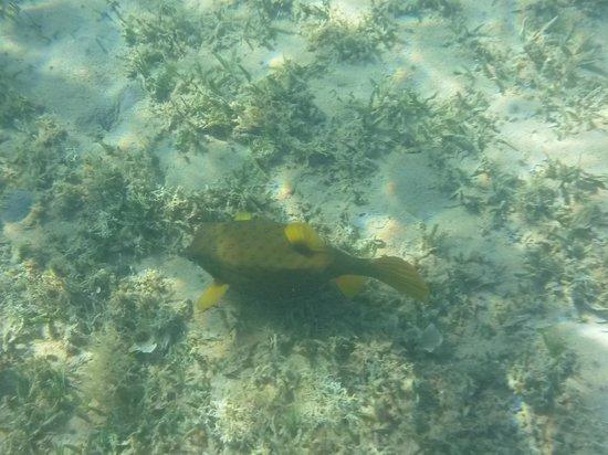 Dahab Resort : под водой на отельном пляже