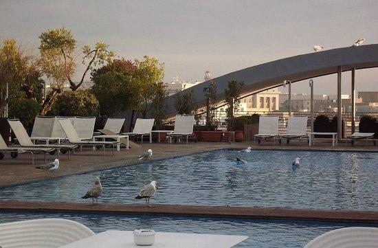 Radisson Blu es. Hotel, Roma: Gulls enjoying rooftop pool