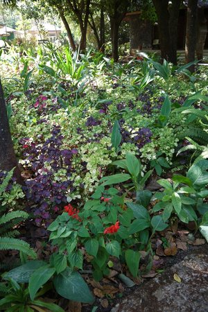 Abay Minch Lodge: Flowers in the garden