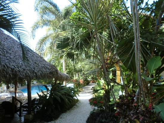 Zula Inn Aparthotel : Zula grounds with pool