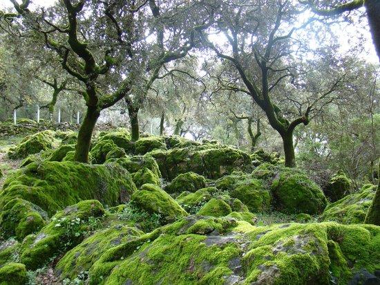 Parque natural de la Sierra de Grazalema : Bosque de alcornoques