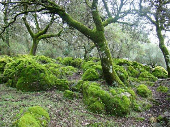 Parque natural de la Sierra de Grazalema : El musgo lo invade todo