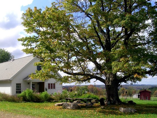 Greenwood Hill Farm : House and Tree