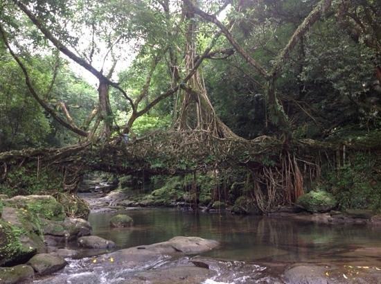Mawlynnong Waterfall: living root bridge