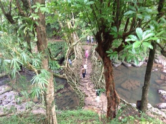 Mawlynnong Waterfall: Walking over the living root bridge.