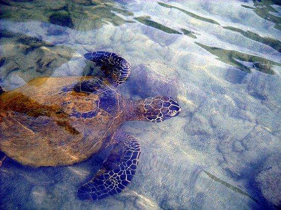 Honaunau Bay, Hawai'i (Two-Step)