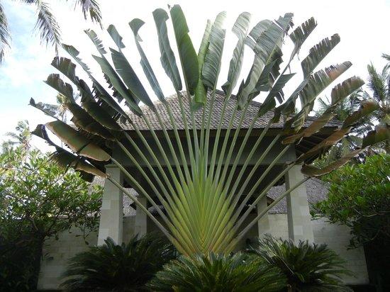 Villa Biara: Front Entrance