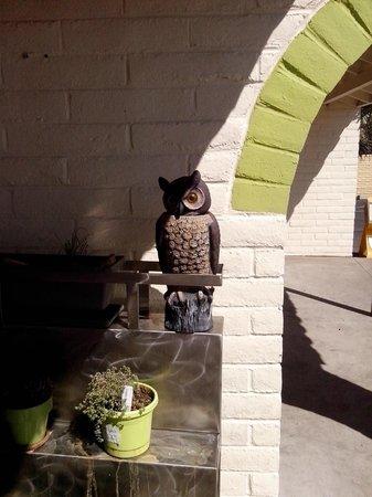Gourmet Girls Gluten Free Bakery : cute owl at the entrance