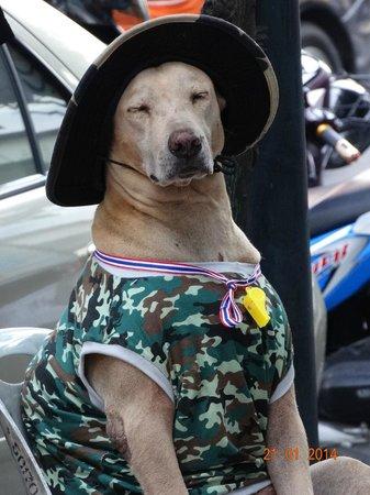 D Varee Xpress Makkasan, Bangkok: Photo d'un chien de garde à MBK...pour le fun