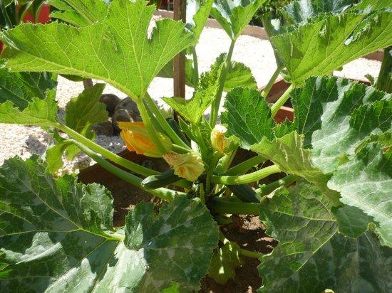 Villa M6: Blick auf die Zucchini