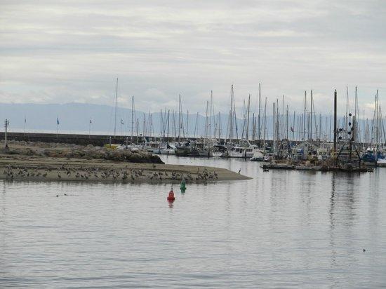 Stearns Wharf: view from wharf