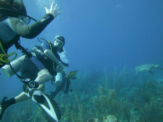 Huracan Diving: Logger-Head Turtle!!!