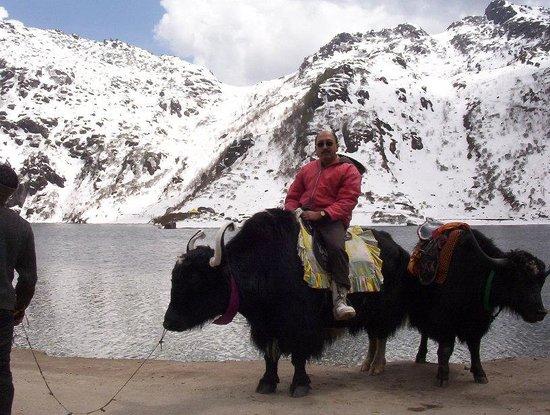 Tsomgo Lake: on the yak