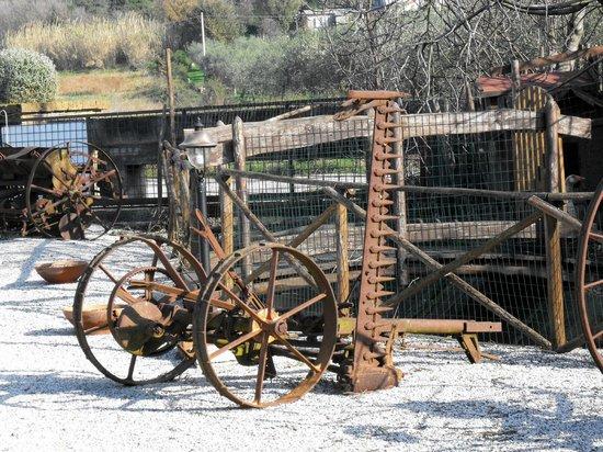 Azienda Agrituristica Terre di Paestum: INGRESSO STRUTTURA