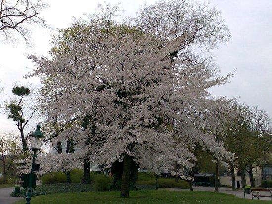 Belvedere Palace Museum : Весна