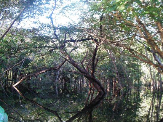 Amazon Tupana Lodge: passeio no igarapó