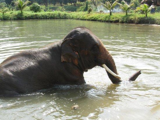 Ban Chang Thai - Elephant Camp: Bathing Elephant
