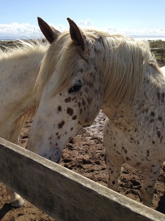 Hotel Dos Mares: Horses at the riding stable on the hotel beach