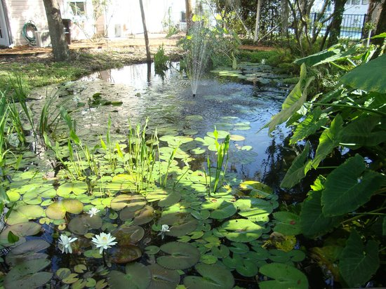 Sweetwater Branch Inn: Koi Pond--beautiful flowers