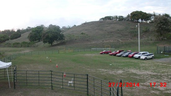 Cowboys Cantina & Outside Grill: Rodeo Field w/cattle on hill