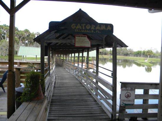 Gatorama: The walkway above the lagoon & gators