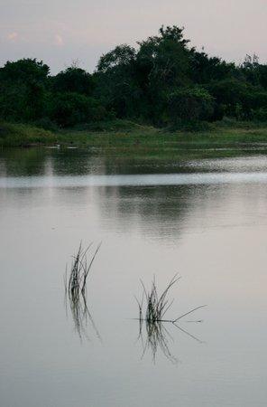 Palm Garden Village Hotel : elephant lake