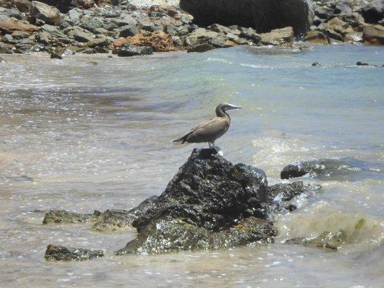 Baia do Sueste: Natureza na Baía do Sueste.