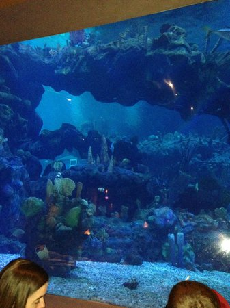Coral Reef Restaurant: The fish tank is huge!