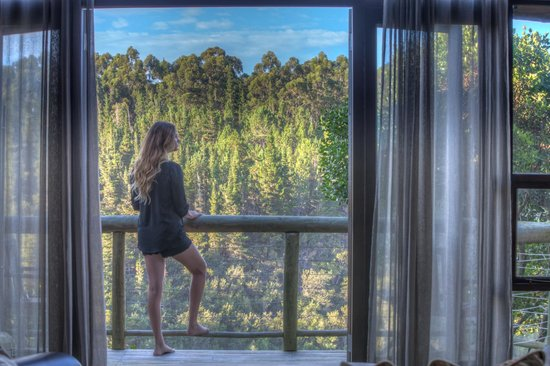 Tsala Treetop Lodge: the balcony overlooking harkerville forests