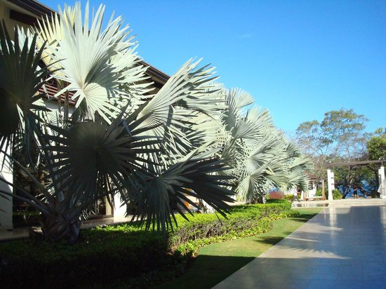 Reserva Conchal Beach Resort, Golf & Spa: entering pool/spa area