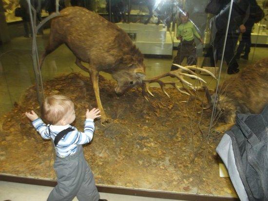 State Darwin Museum : Музей