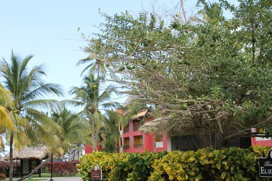 Caribe Club Princess Beach Resort & Spa: les extérieurs