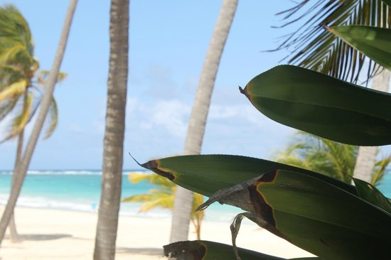 Caribe Club Princess Beach Resort & Spa: la plage