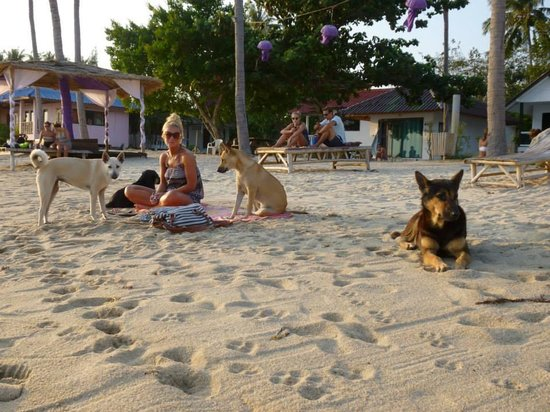 The Beach Village Backpackers: Love these dogs!!!