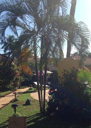 Casa De Goa Boutique Resort : pretty trees
