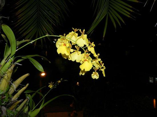 Pousada Safira do Morro: Orquídeas en el área de descanso