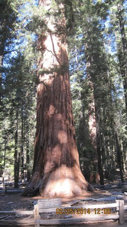 Mariposa Grove of Giant Sequoias: Right in the parking lot