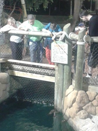 Congo River Golf: feeding time