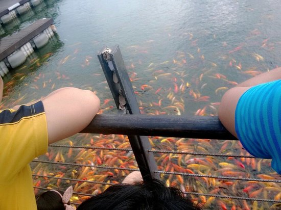 Santa Rosa, Filipini: Feeding fish is one of the activities there!
