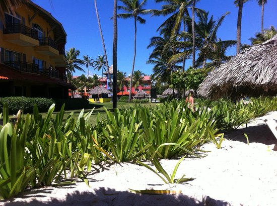 Caribe Club Princess Beach Resort & Spa: Jardim