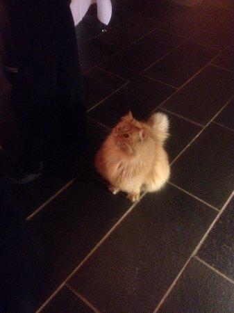 Alta, Norwegia: Hotel cat